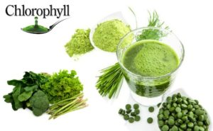 Diệp lục Chlorophyl