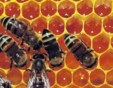 """""""Thần dược"""" keo ong thực chất là gì?"""
