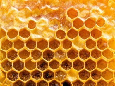 Keo ong: Tủ thuốc tự nhiên thu nhỏ